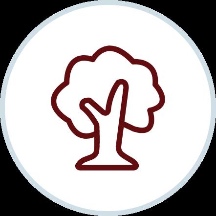 Tree disputes - QCAT